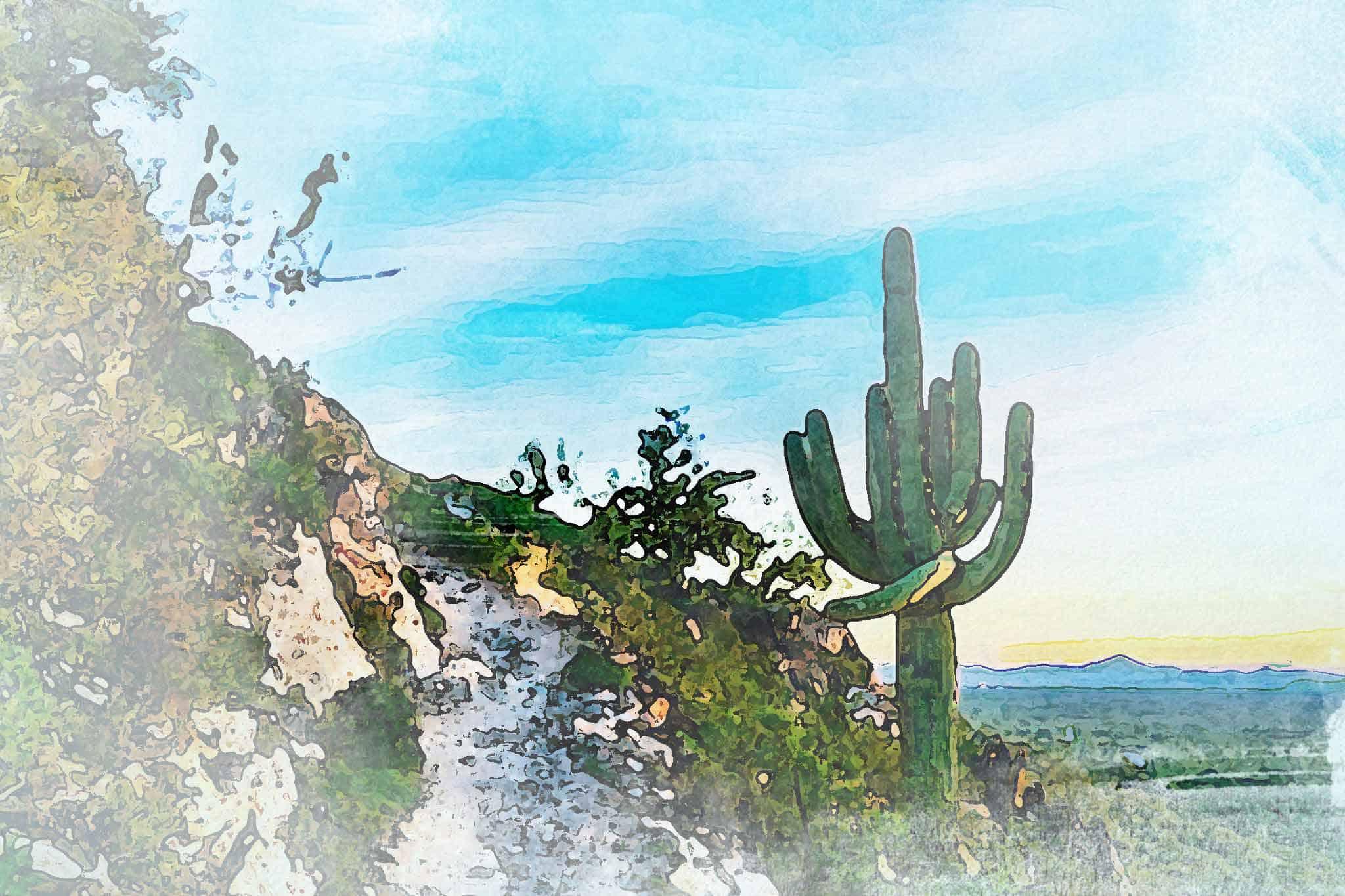 cactus new sky road