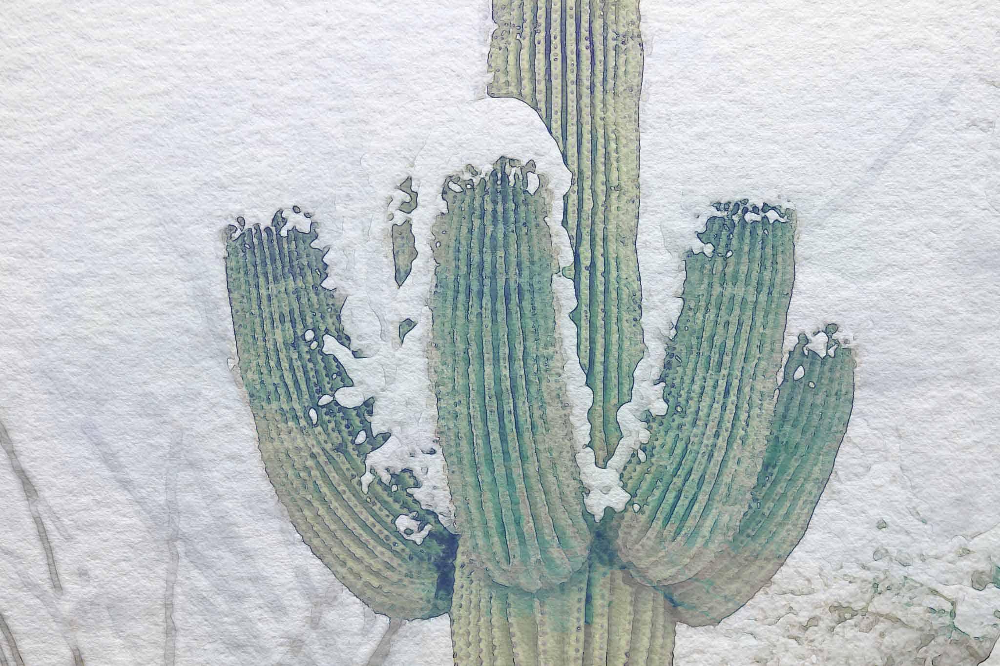 cactus snow wc