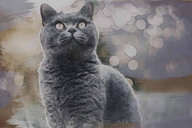 cat ash black