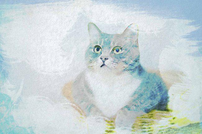 cat ash brown blue