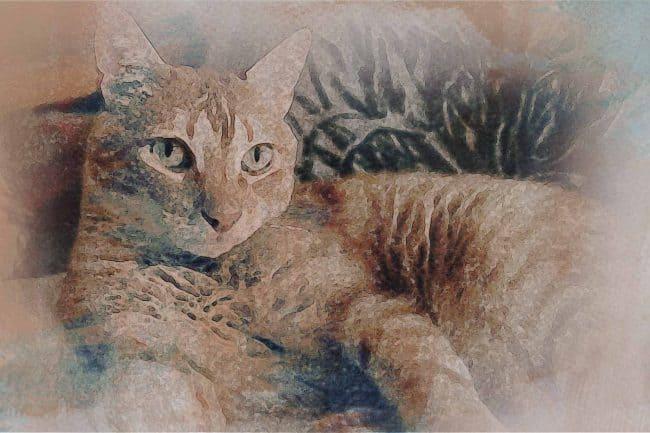 cat ash brown green
