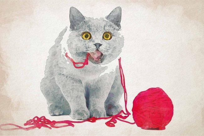 cat ash white