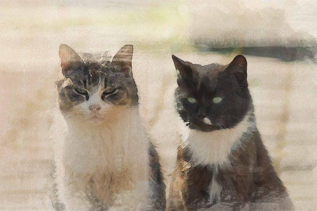 cat black white yellow