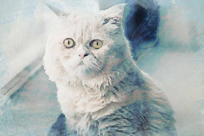cat brown white