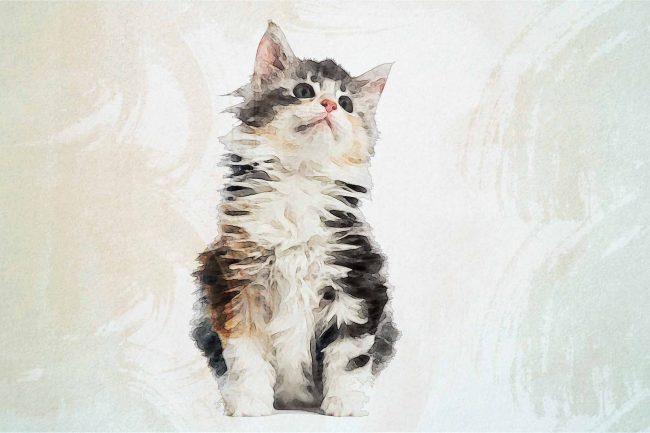 cat brown white pink