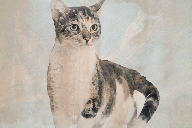 cat brown white striped