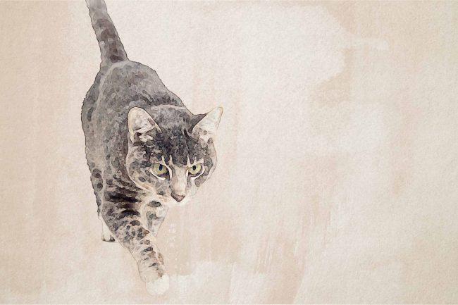 cat brown white walking