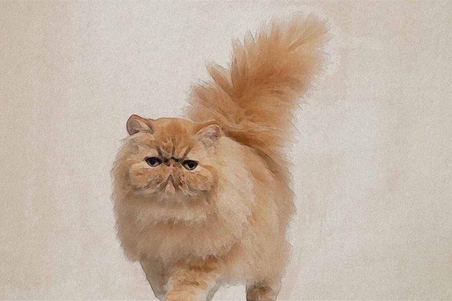 cat yellow brown