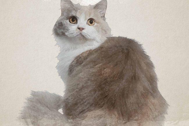 cat yellow white