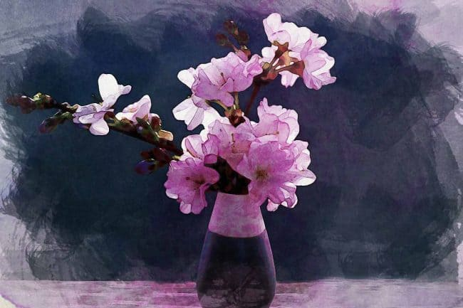 cherry blossom black pink blue
