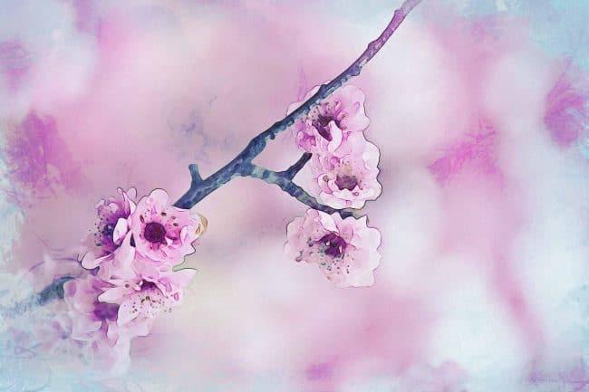 cherry blossom pink blue pink