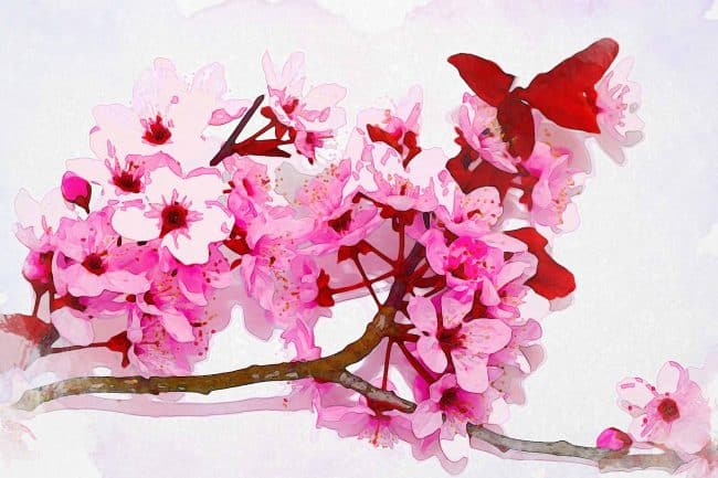 cherry blossom pink brown red