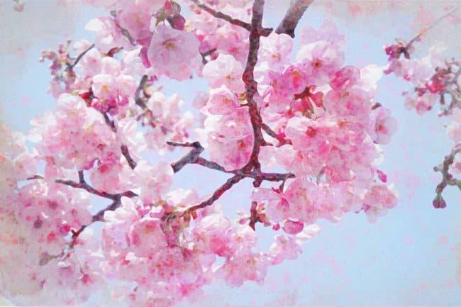 cherry blossom pink brunch
