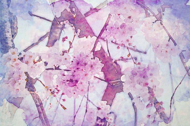 cherry blossom pink brunch white