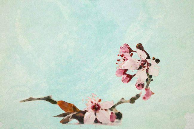 cherry blossom pink green
