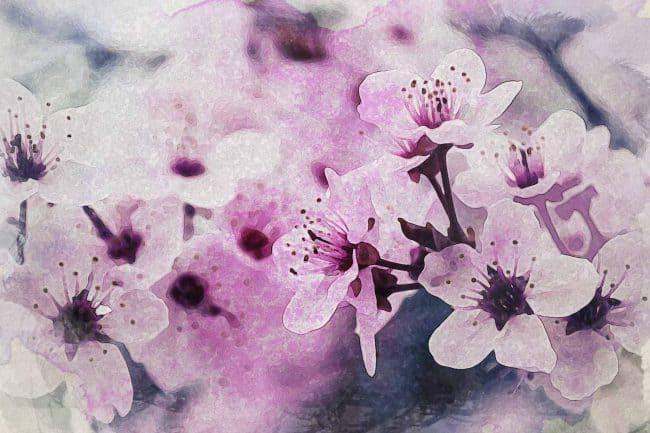 cherry blossom pink green white