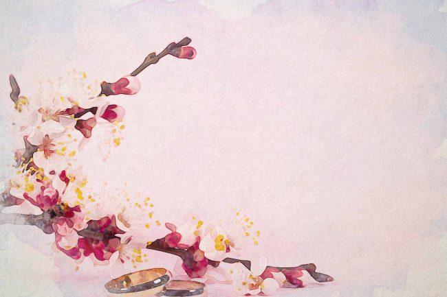 cherry blossom pink white golden