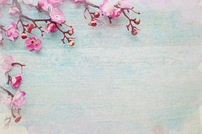 cherry blossom pink wooden blue