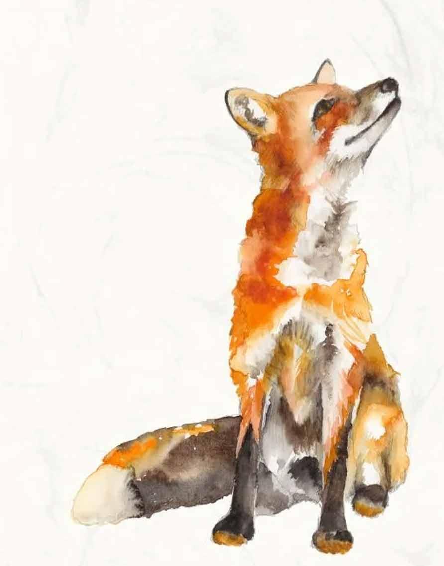 curious orange fox wc