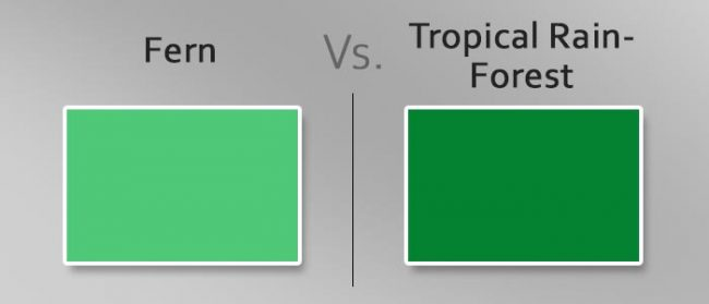 fern vs tropical rainforest
