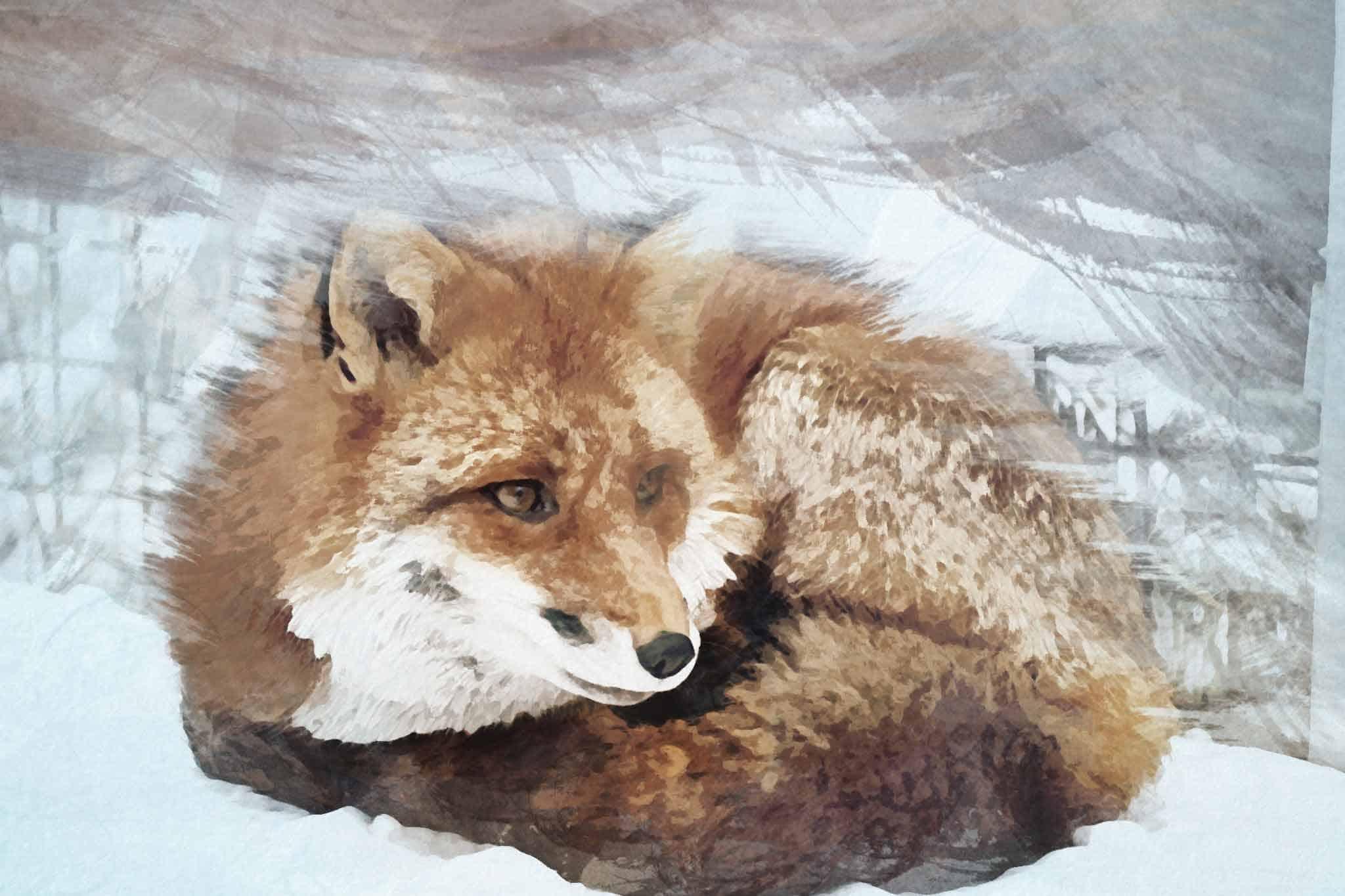 fox red blown yellow