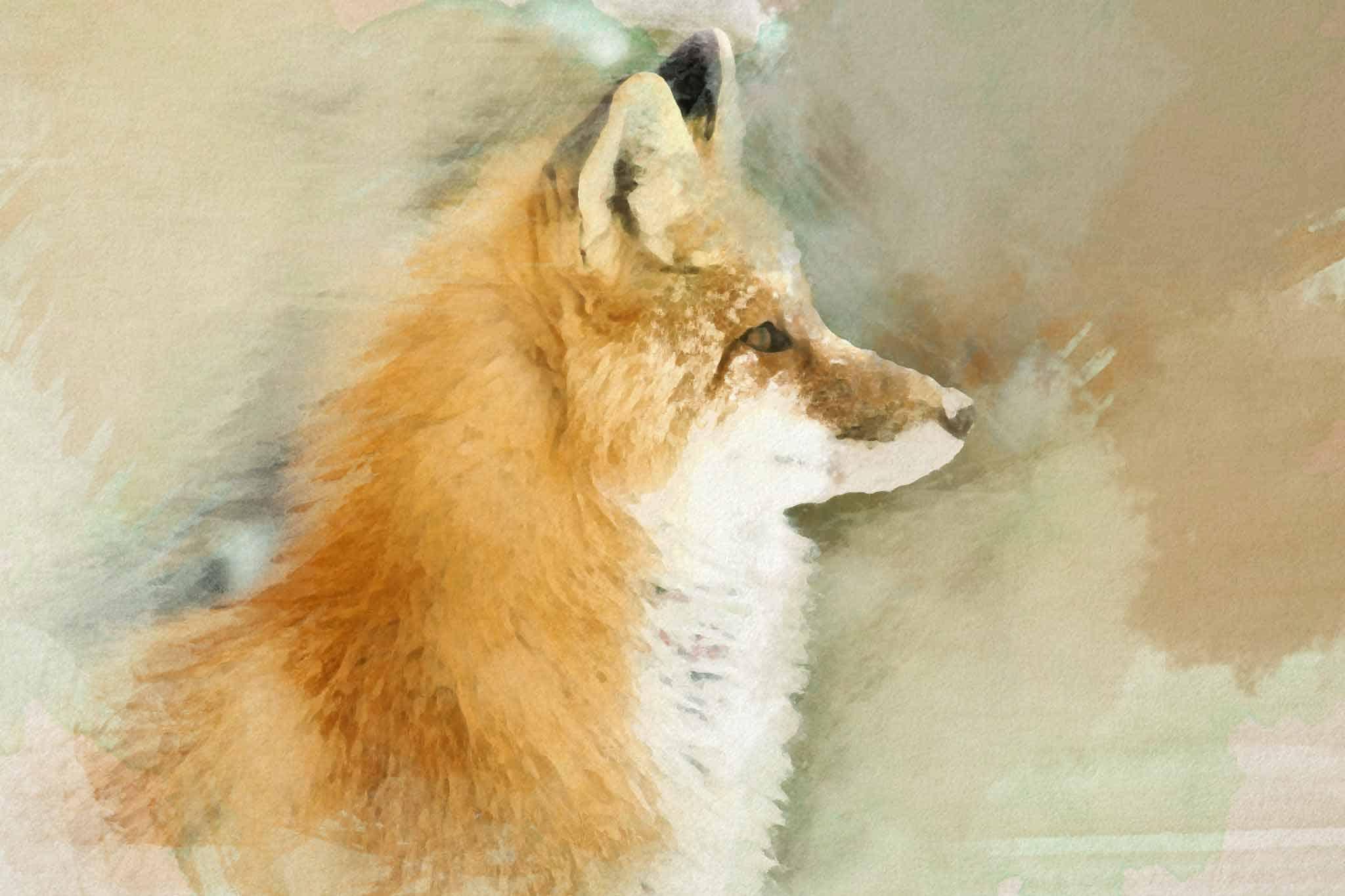 fox red green white