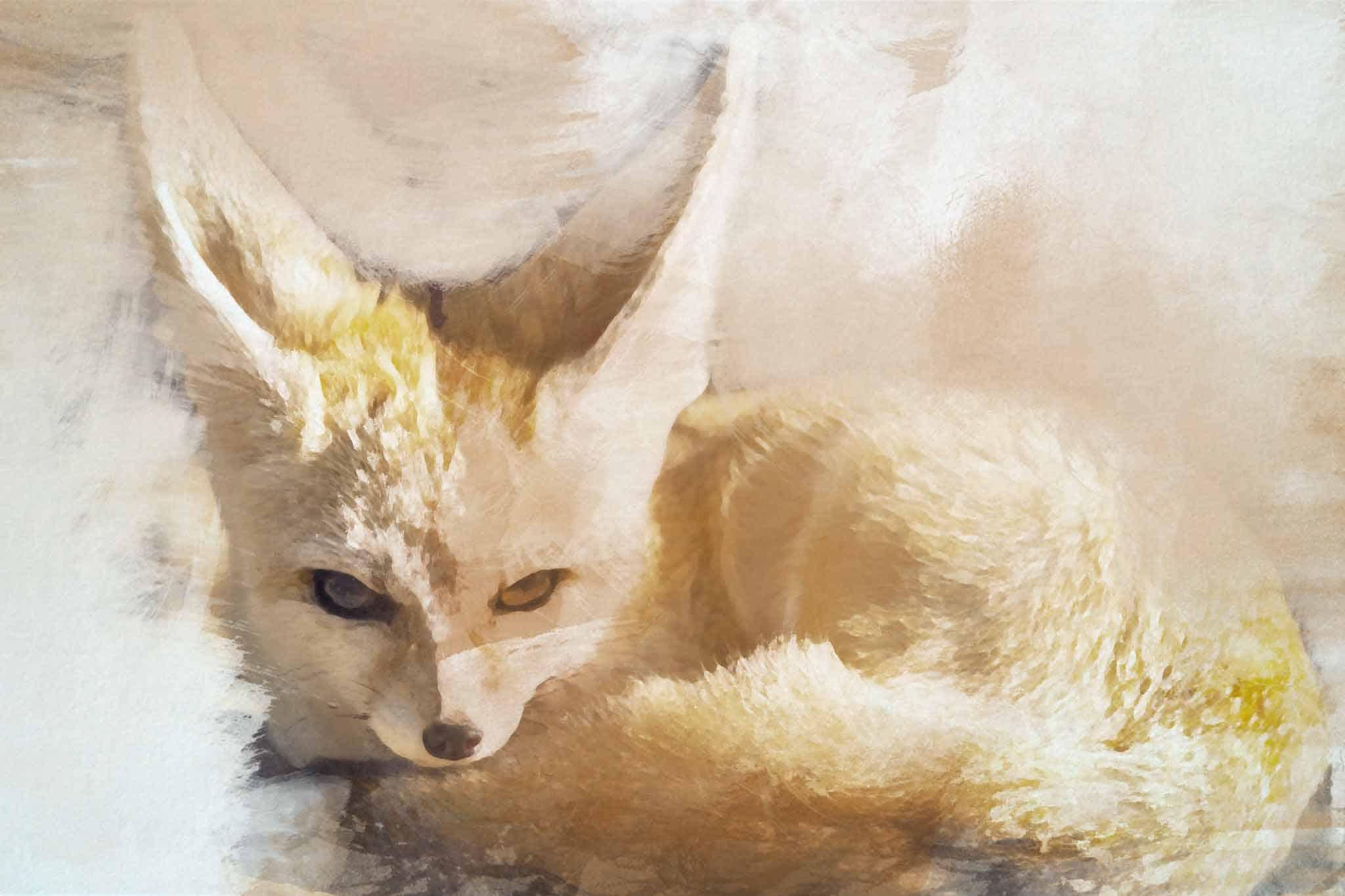 fox red purple brown