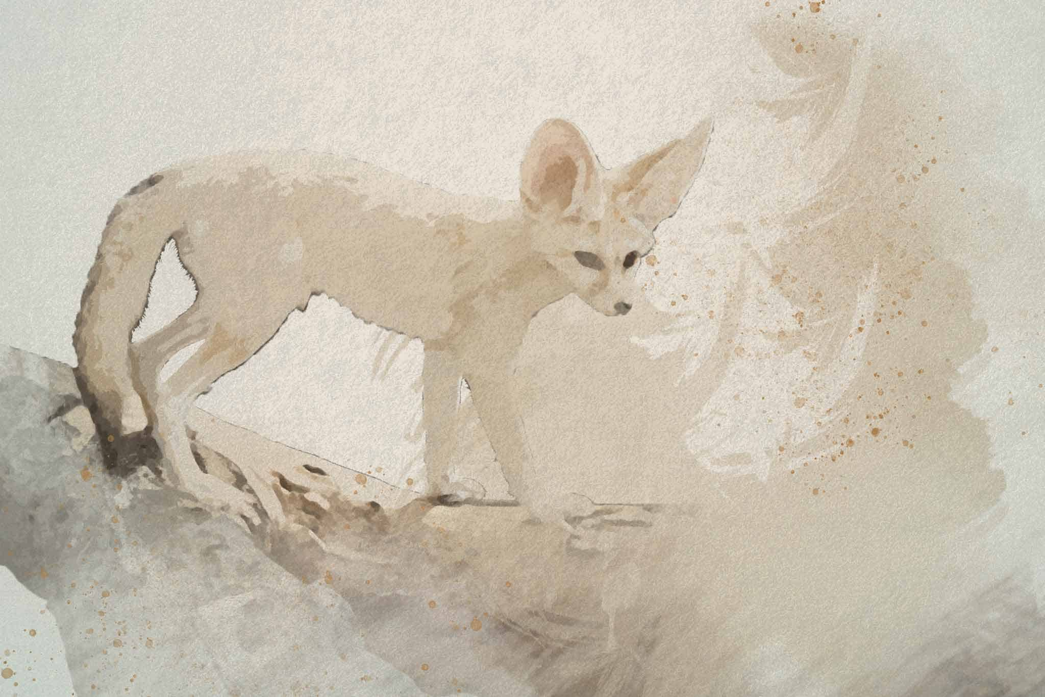 fox red white black