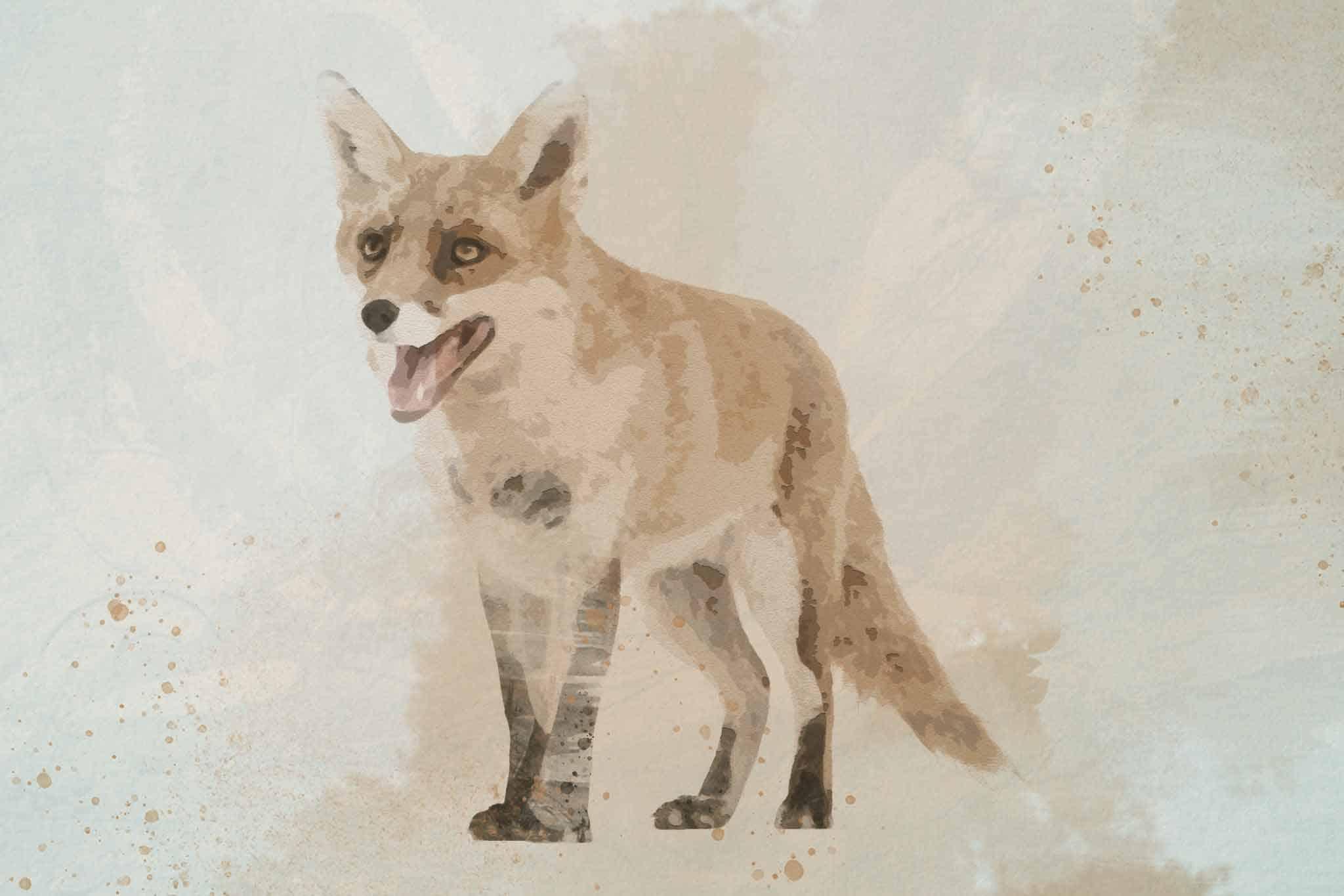 fox red yellow black