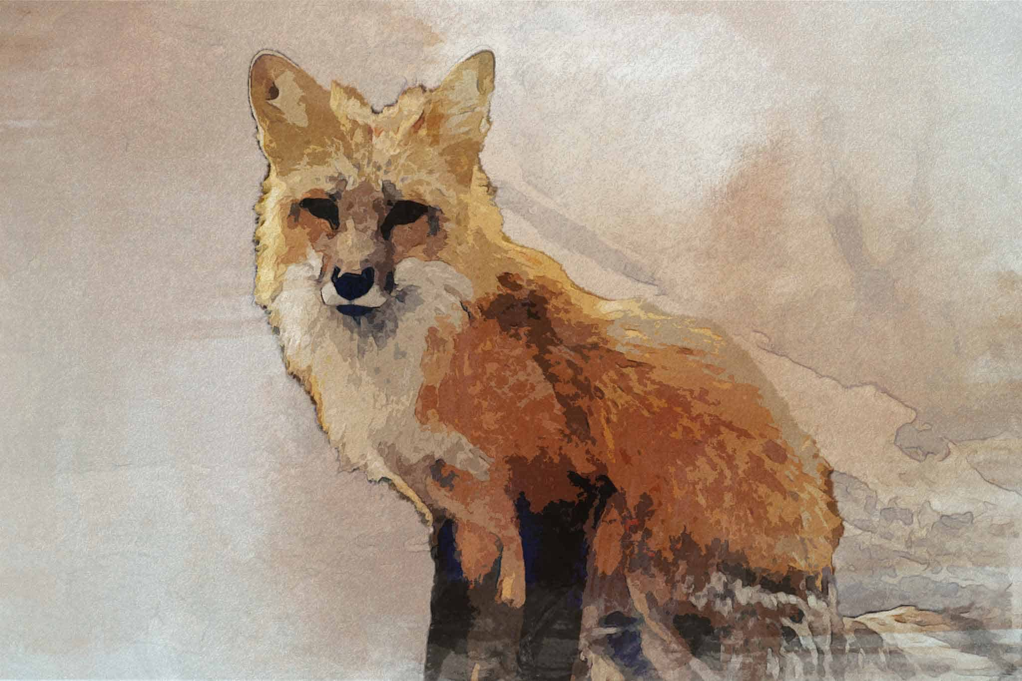 fox red yellow brown