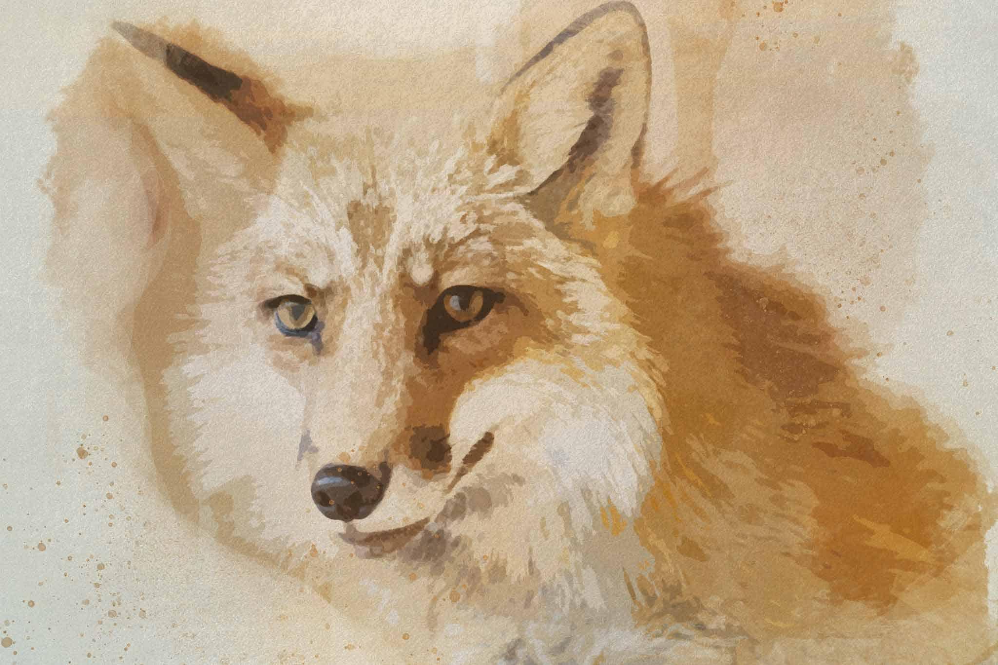 fox red yellow headshot