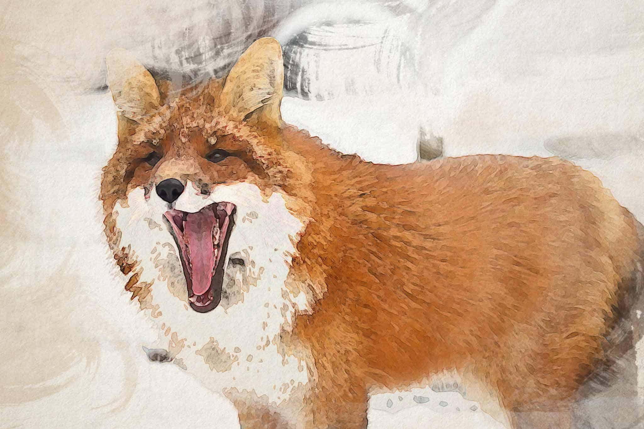 fox red yellow white snow