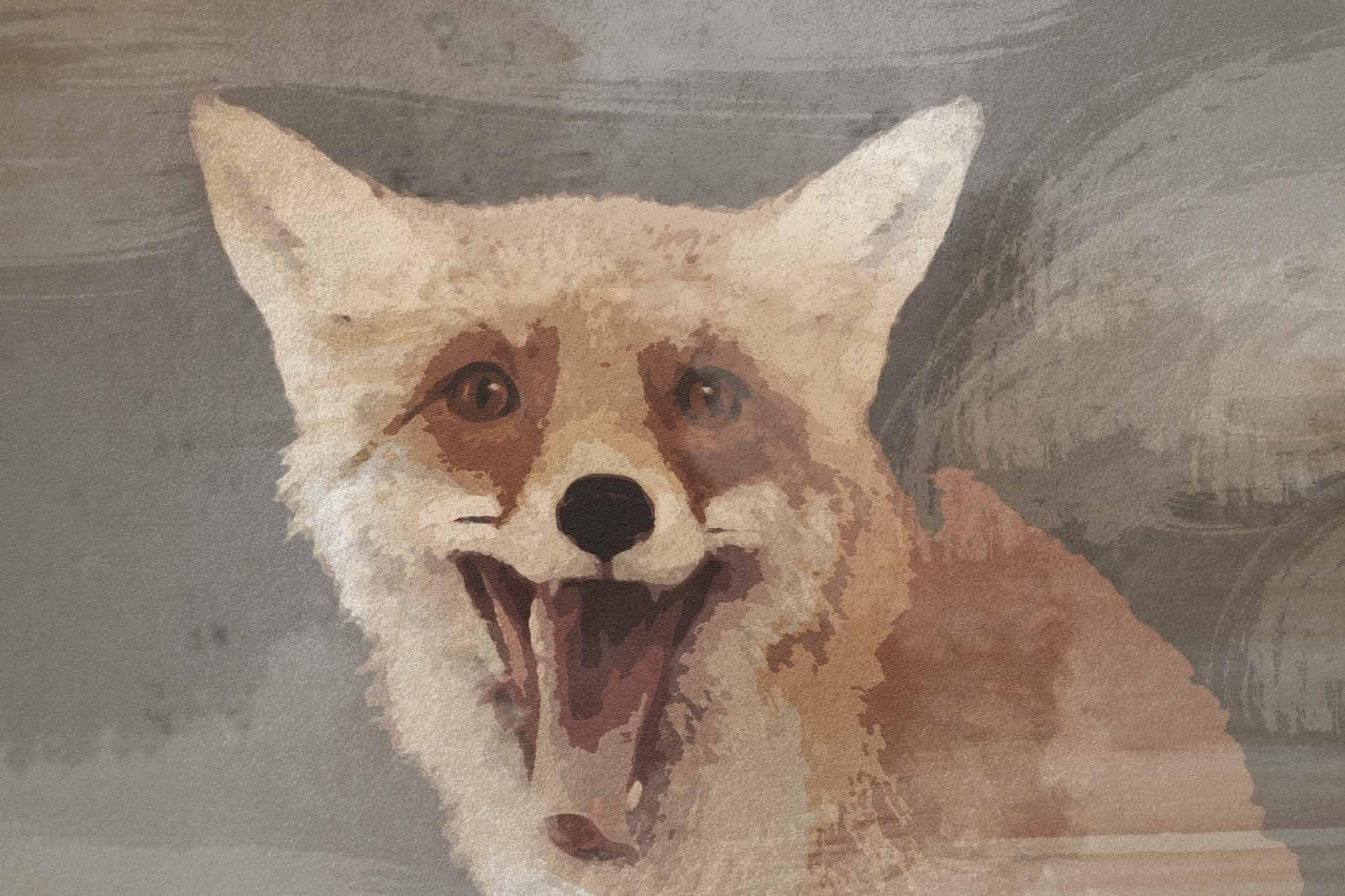 fox red yellow white summer