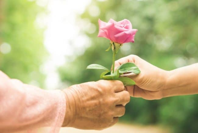 giving rose to hand