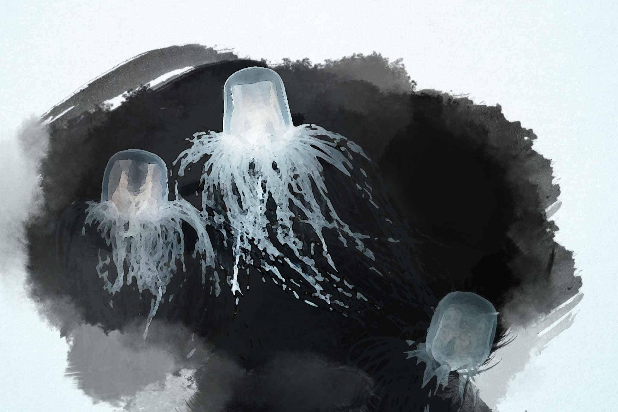 jellyfish black white