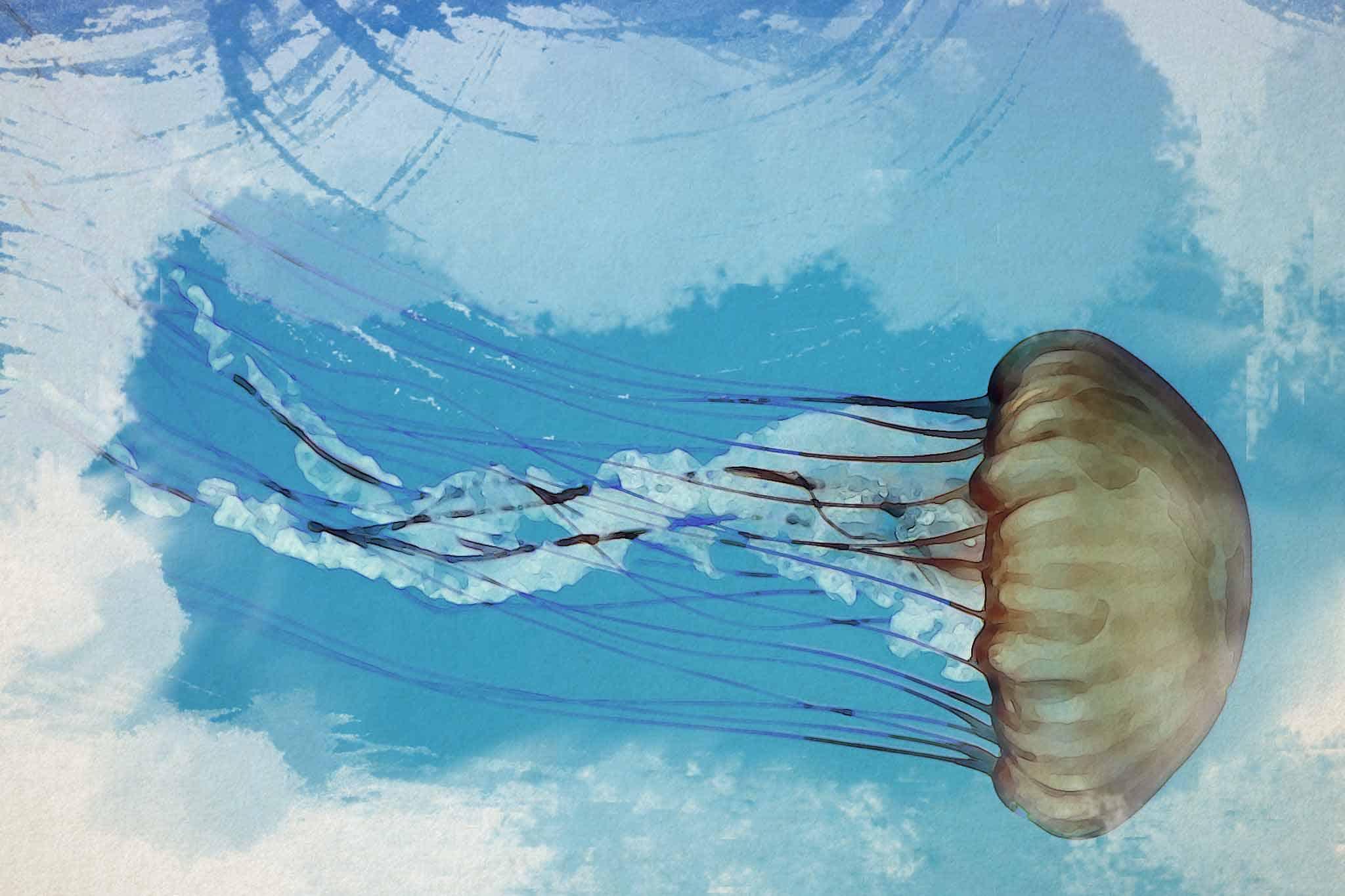 jellyfish brown blue