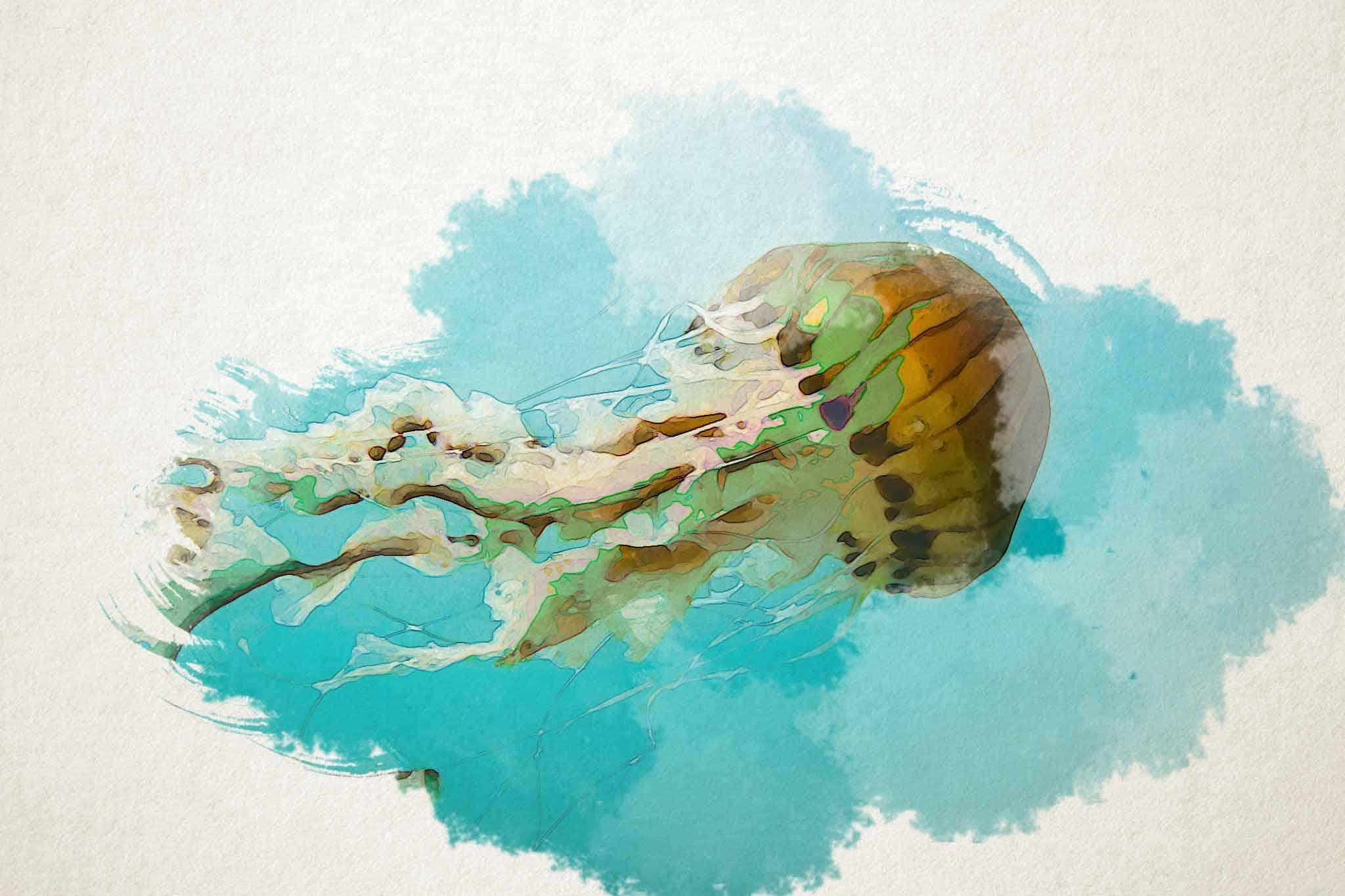 jellyfish coast blue yellow