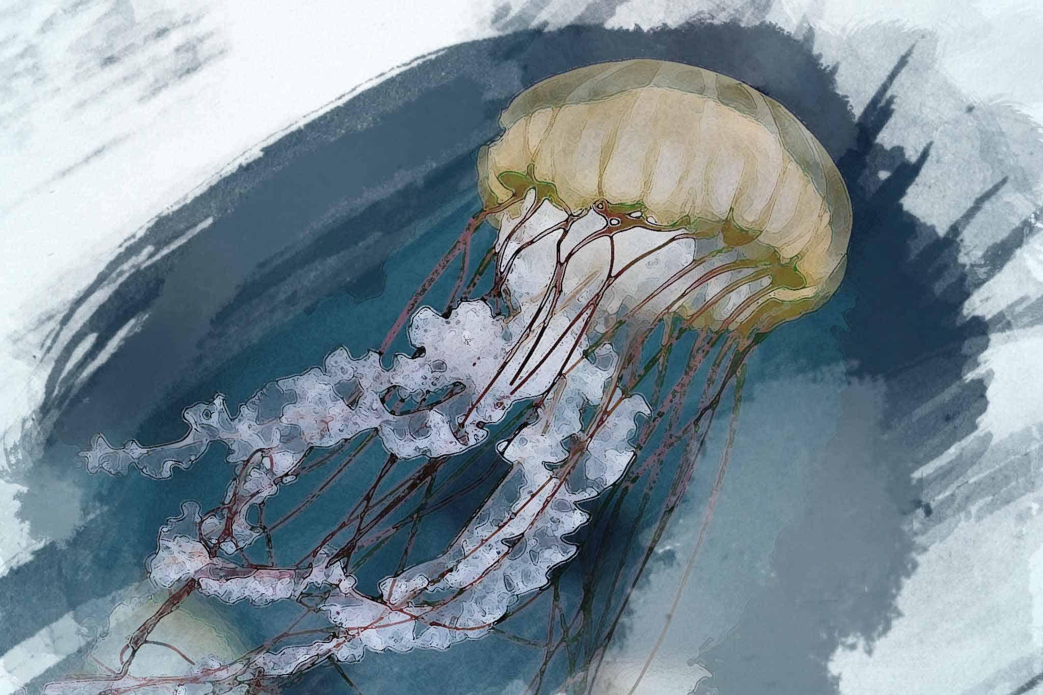 jellyfish fuscescens blue