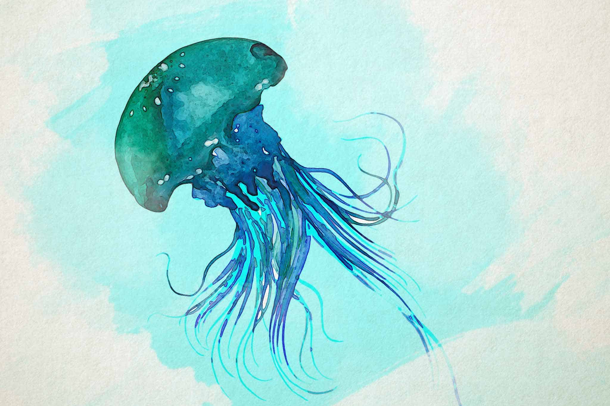 jellyfish green blue