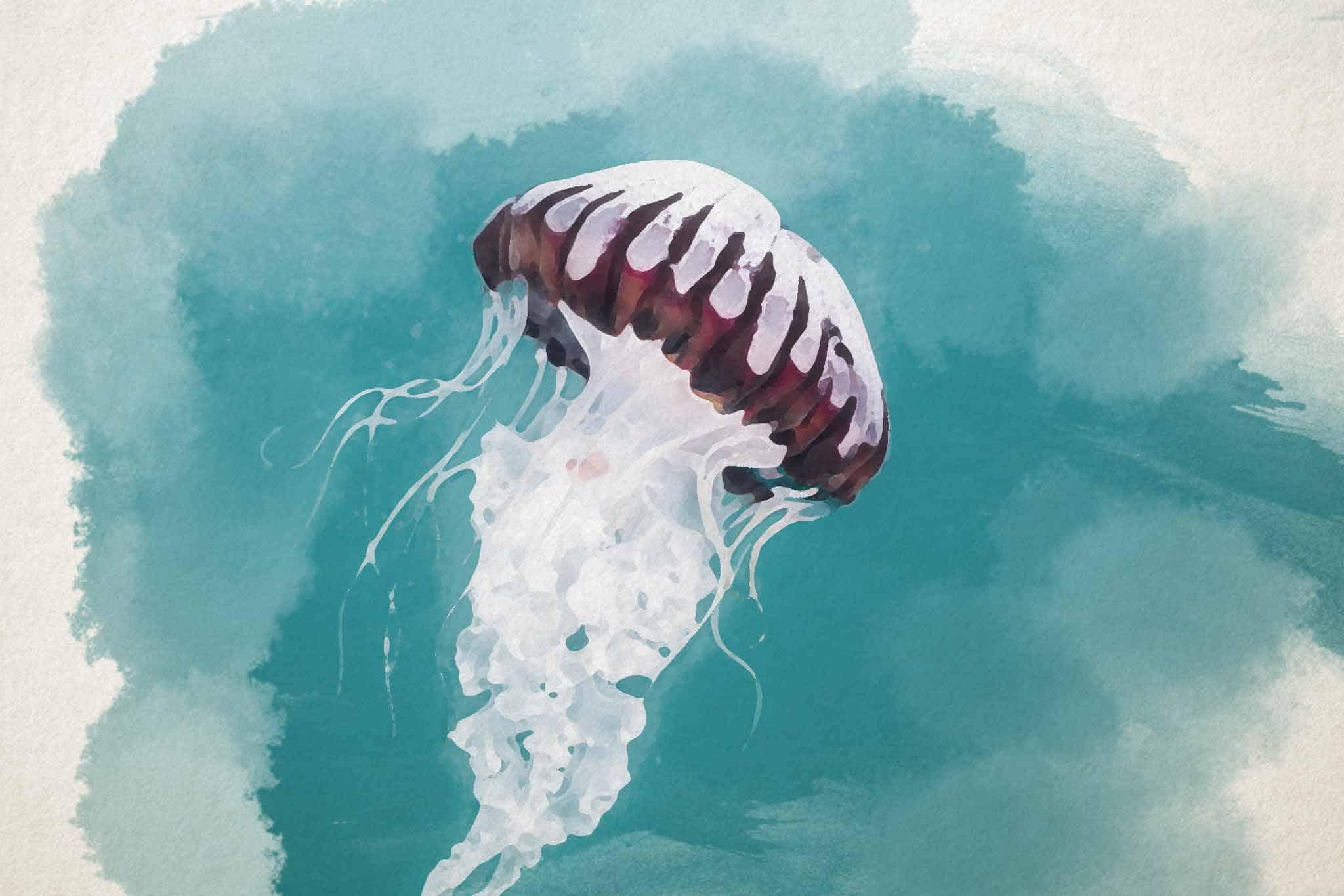 jellyfish green brown