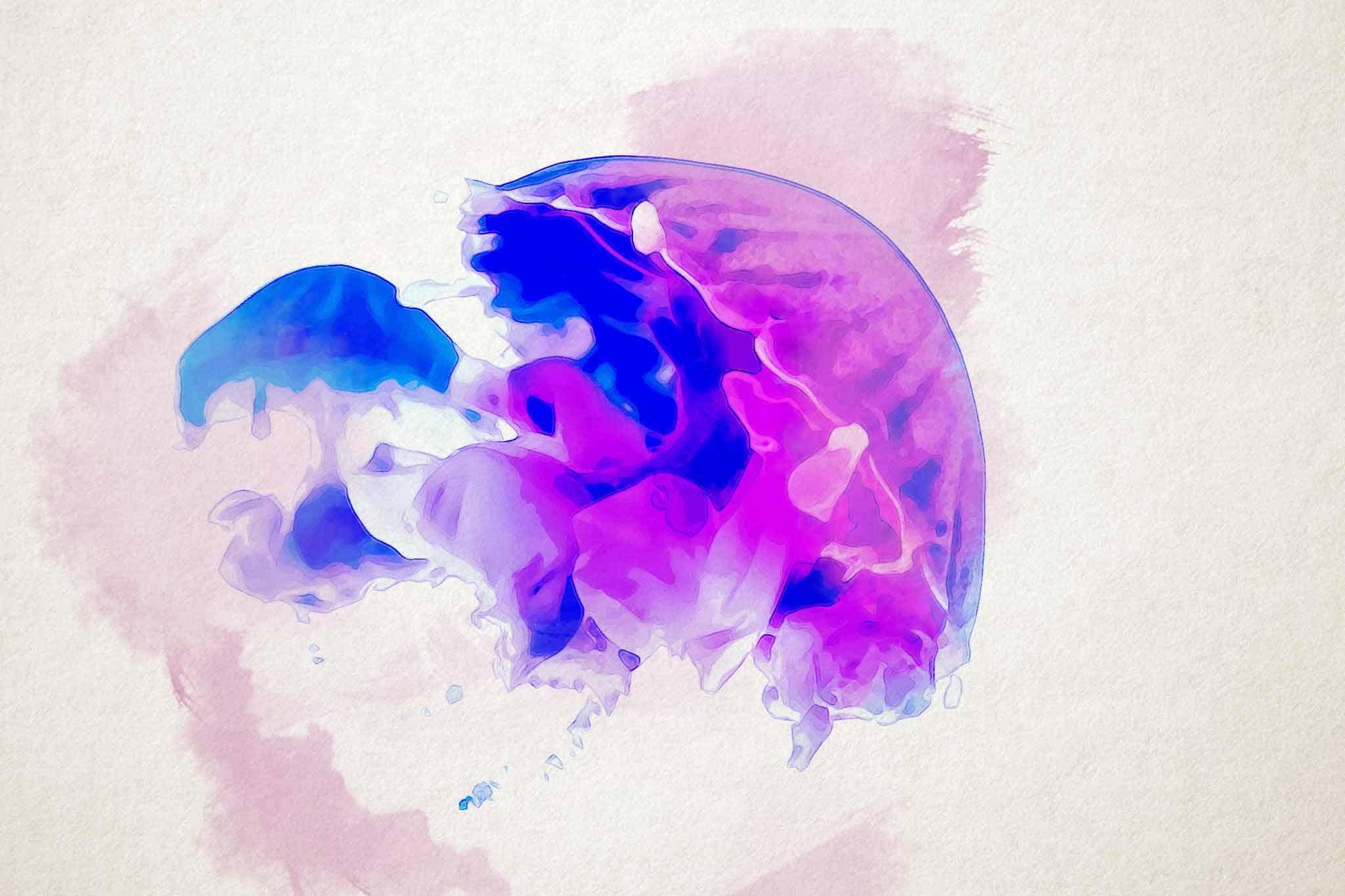 jellyfish pink blue