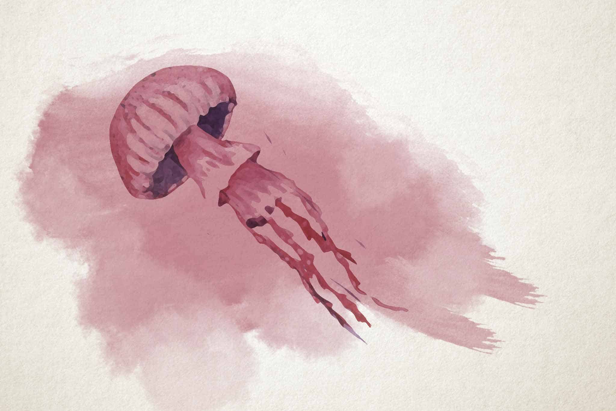 jellyfish pink white