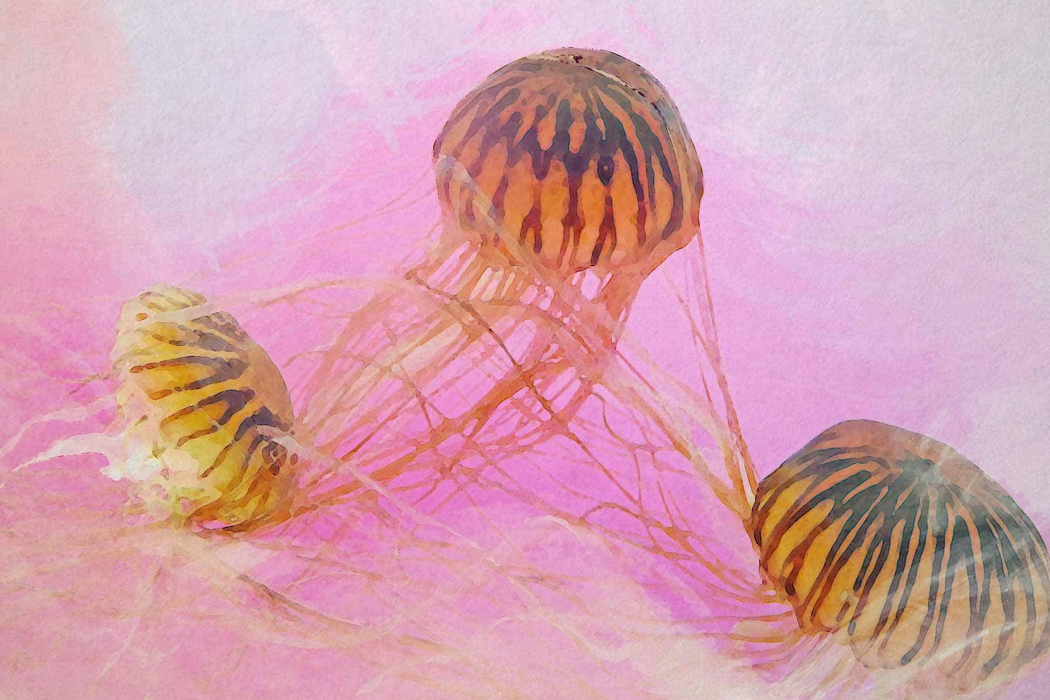 jellyfish pink yellow