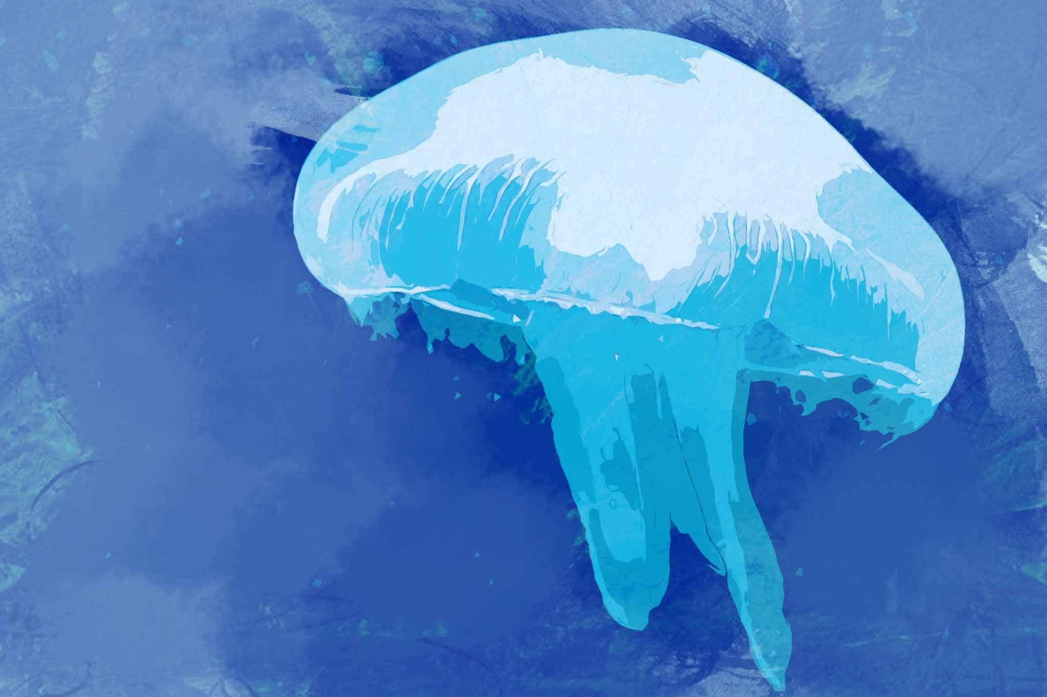 jellyfish white blue