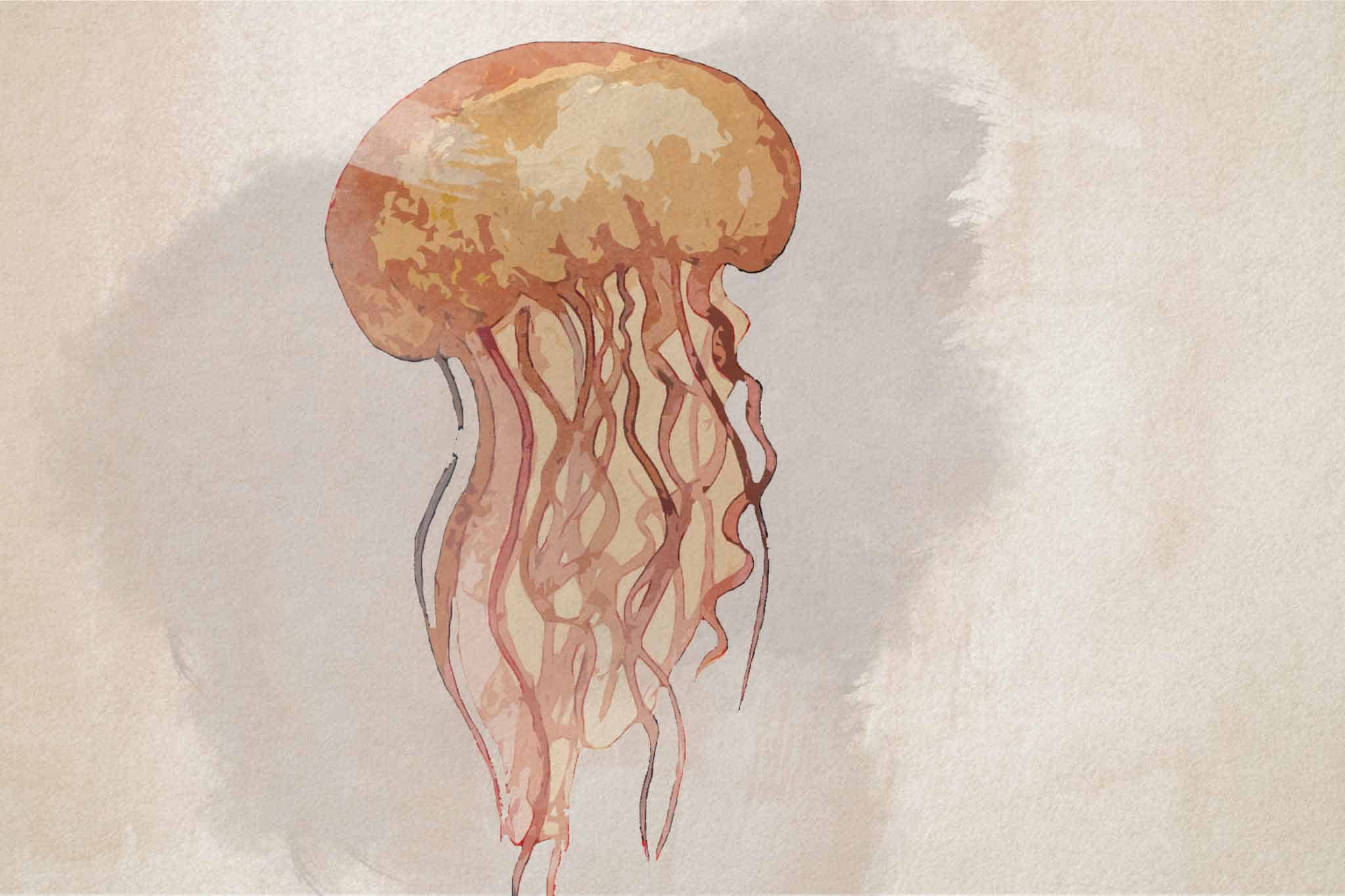 jellyfish yellow brown