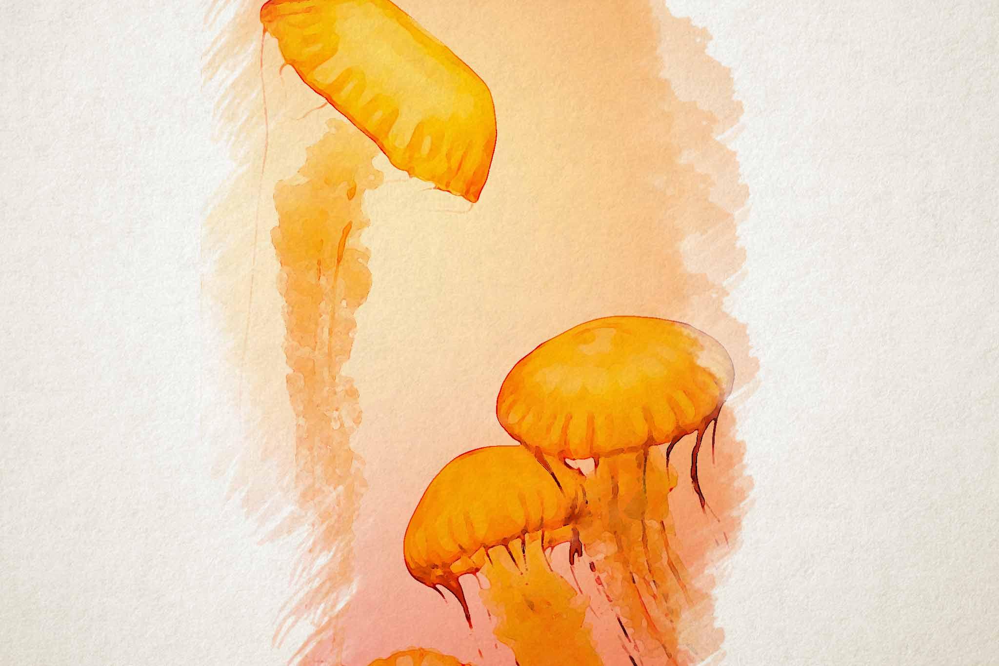 jellyfish yellow red