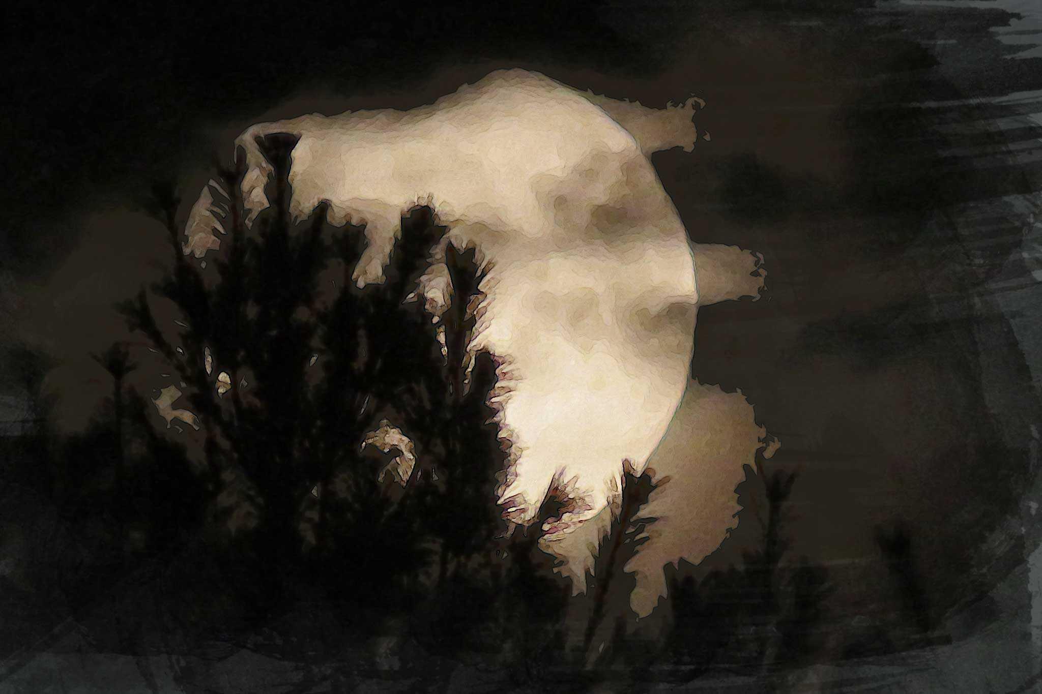 moon night golden black