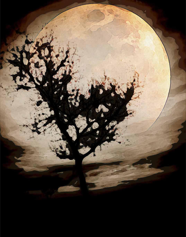 moon night tree big moon