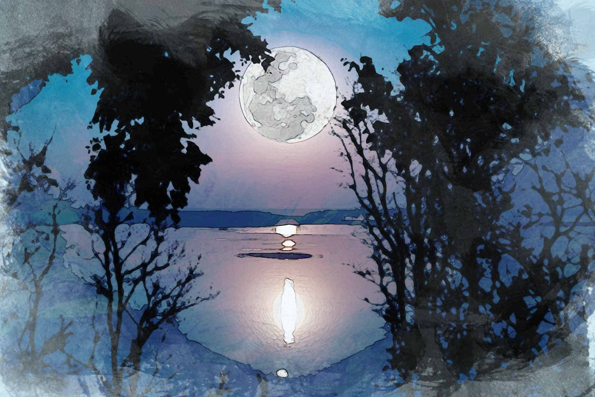 moon night tree moon