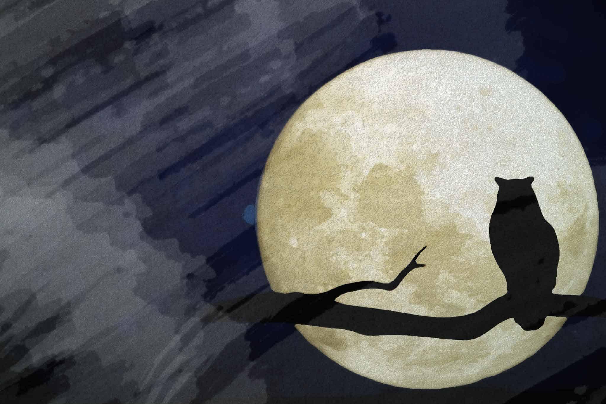 moon night tree owl